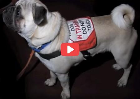 Cão Ouvinte